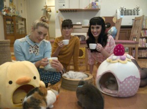 Japanese Cat Cafes
