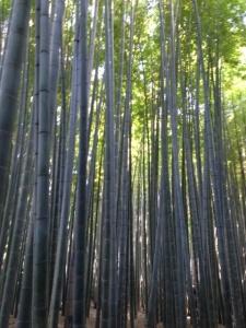 Hokokuji Bamboo Forest